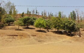 With availability of water, villagers can even plant mangoes which was a distant dreams otherwise