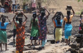 Extreme hardwork by females in scorching heat. Females carrying stone from downstream riverbed